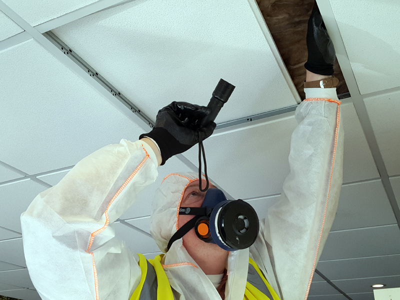Surveyor carrying out an Asbestos Management Survey